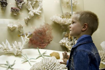 Small boy examine corals in a museum photo