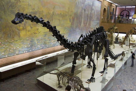 paleontology: Main hall of Paleontology Museum in Moscow, Russia Stock Photo