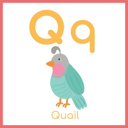 Ładny alfabet zwierząt. Litera Q. Urocza przepiórka. Ilustracje wektorowe