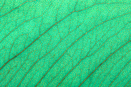 abstract background of green leaf texture, macro picture Stock Photo