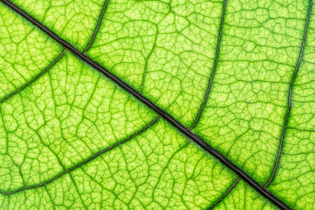 Close up green leaf, texture background Stock Photo