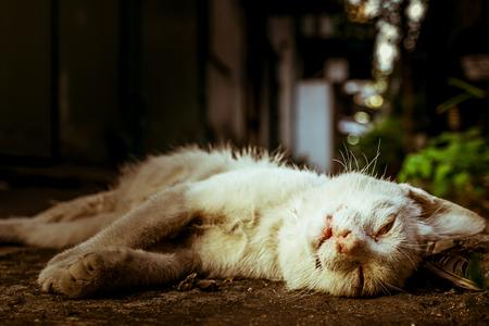 죽음에, 혼자, 슬픔, 인생, 죽음에 개념, 흰색 고양이의 시체가 지상에 사망, 가까이, 스톡 콘텐츠