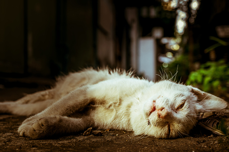 Corpse of white cat died on the ground, close up ,conceptual to death, alone, sadness, life,