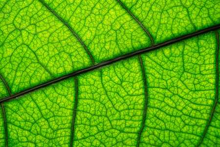 Macro picture of green leaf texture background