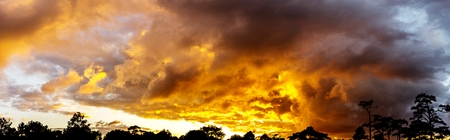 Panorama sky twilight golden cloudy and tree sihouette background of sunrise or sunset