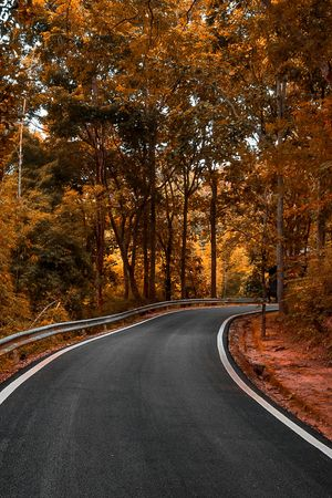 Curave empty road drive in to the autumn forest background surreal image