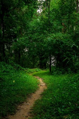 The walk path in the rain forest, lanscape background Banco de Imagens