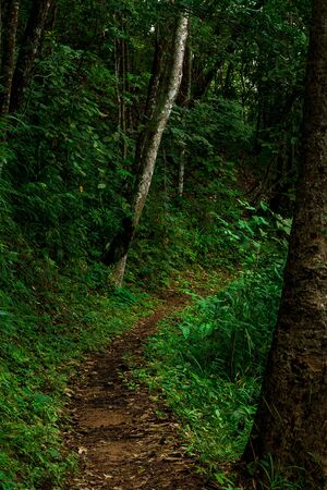 Curve path in the fresh rain forest background Stok Fotoğraf