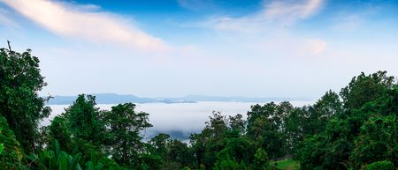 Panorama morning lanscape rain forest mountain and sea of mist background