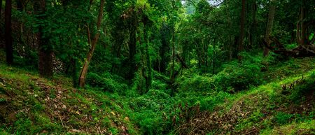 Panorama view of forest in Doi Khun Tan National Park, Thailand