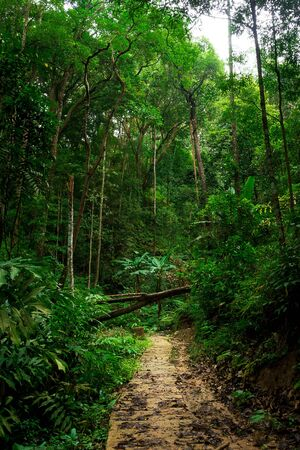 Forest path in to the jungle nature landscape background