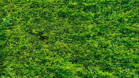 Abstract green grass texture nature background Banco de Imagens