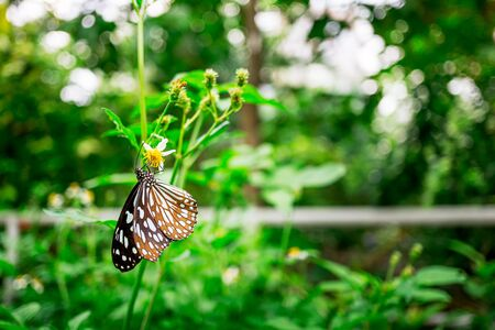 Brown butterfly feeding on yellow flower in garden nature blur green background close up macro picture
