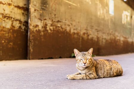 one sleepy yellow cat lying on the street and soft blur background with text space, close up animal portrait