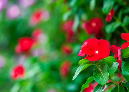 Close up red flower and blur flora green background and text space Фото со стока