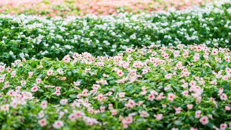 Colorful flower bush in public park flora nature background