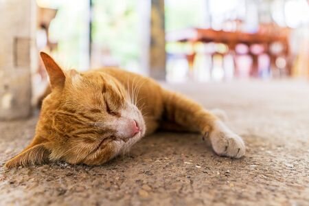 Close up picture of orange cat sleeping on the floor animal background