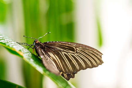 Butterfly sitting on green leaf after rain close up picture 版權商用圖片