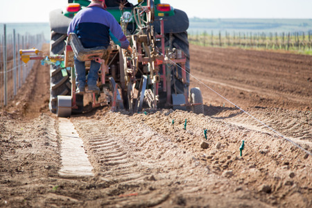 Planting a new vineyard