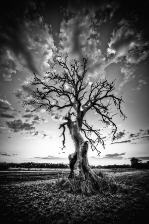 epic: Alone dead tree on country highway in black and white