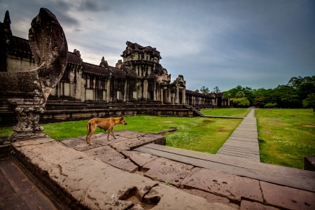 SIEM REAP, CAMBODIA - CIRCA JUNE 2012  On the night of our first visit to Angkor at sunset  I walk past this skinny dog stands on the steps of ancient ruin looking out into the distance  Maybe it was looking for food, scraps, etc  I did try to get as clos
