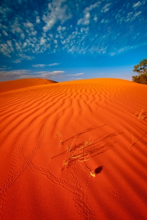 Red outback ripple sand dune desert with blue sky. photo