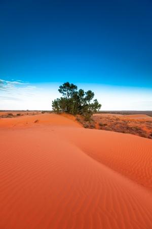 sandhills: Red outback ripple sand dune desert with blue sky.