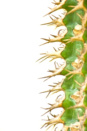 Green Cactus Background