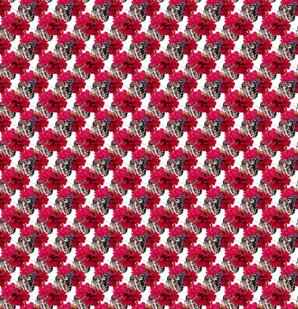 butterfly on zinnia flower seamless pattern for background Stock Photo