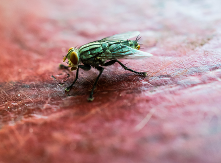 A macro shot of fly onon red table. Stock Photo