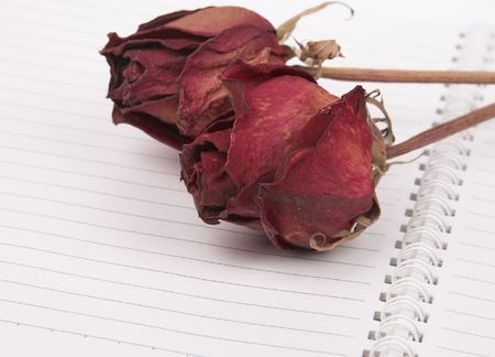 red dried roses on the blank book. photo