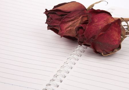 Red dead roses on a blank book Stock Photo - 4186368