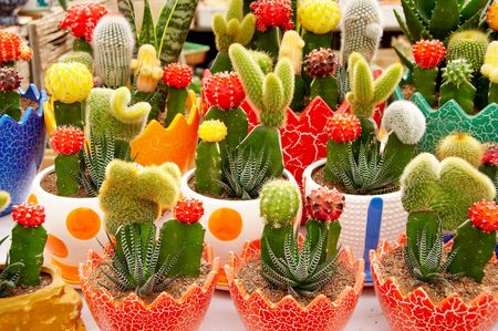 aridness: Different kinds of little cactus potted displaying for sale Stock Photo