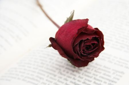 a dying rose placed on a book photo