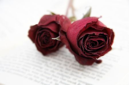 dry rose on book