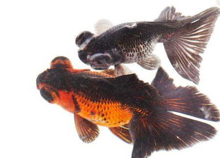 fishy: golden fish Stock Photo