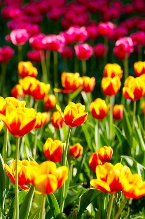 backlighting: flower field