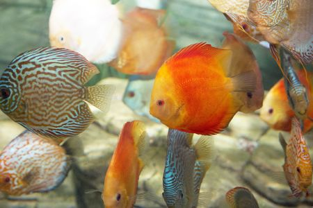 group of tropical fishes, undersea Stock Photo - 4858275