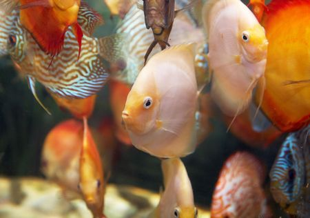 a goup of colorful tropical fishes. photo