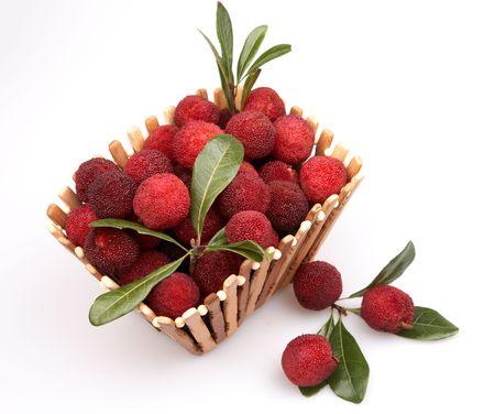 ericaceae: waxberry