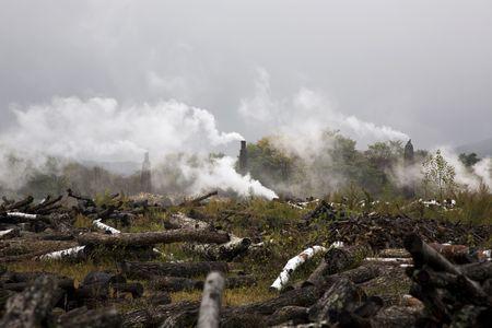 contaminacion ambiental: La deforestaci�n y la contaminaci�n ambiental