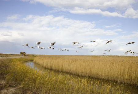 migrating: bird migrating