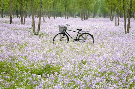 urban jungle: Bicicleta en el campo de la flor