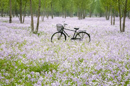 Bicycle in the flower field