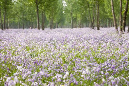flower carpet photo