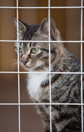 Cat shelter Stock Photo - 7650564