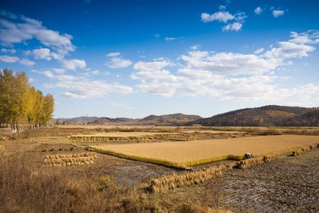 rural landscape Stock Photo - 7815942