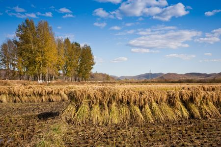 autumn rural landscape Stock Photo - 7815937