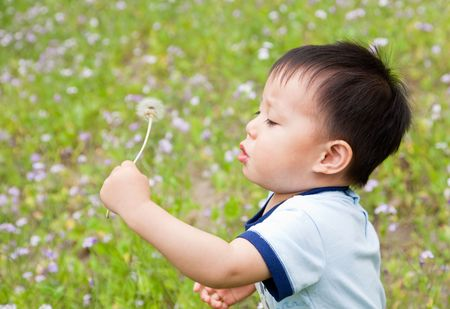Baby blowing a dandelion Stock Photo - 8186270