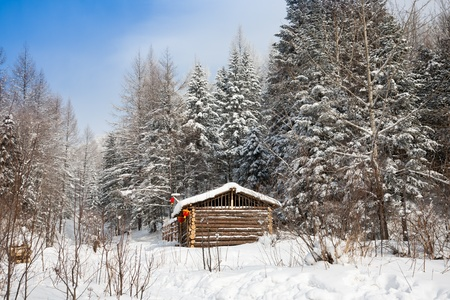 Cabin in winter forest photo